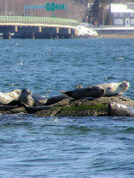 Seal Watch Tour - Save the Bay